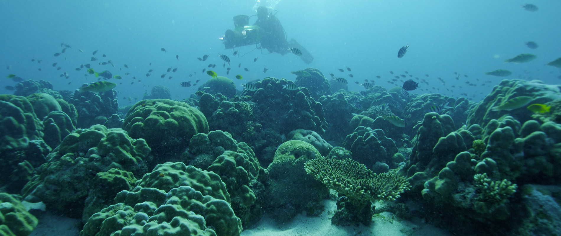 Les océans, des alliés décisifs dans la bataille pour le climat