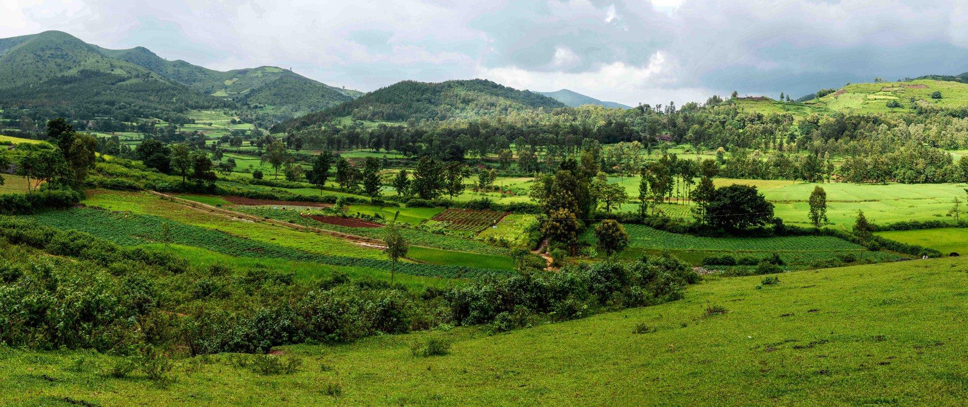 Agroforesterie dans la vallée indienne d'Araku